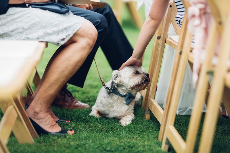 wedding dog in bowtie