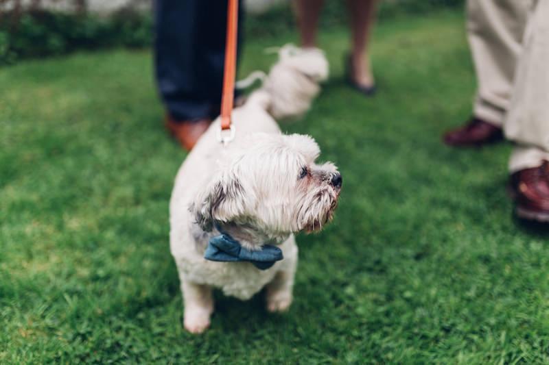 wedding dog bowtie