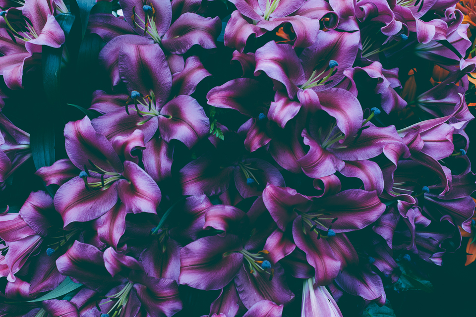 Purple lillies at Chelsea Flower Show 2014. Photography by Miss Gen Photography