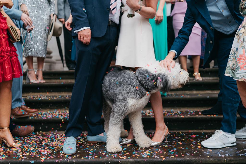 city wedding dog